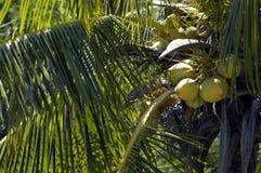 пальма Стоковое Фото