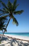 пальма Стоковое Изображение