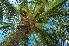 пальма underneath Стоковая Фотография RF