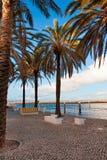 пальмы бульвара Стоковые Фото