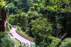 Пальмы вдоль дороги в деревне Бали стоковые фотографии rf