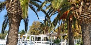 Пальмы в гостинице стоковая фотография rf