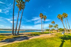 Пальмы в заливе полета Стоковое Изображение RF