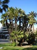 Пальмы в парке города Стоковые Изображения RF