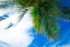 Пальмы в сини стоковое изображение rf