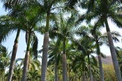 Пальмы в тропиках стоковая фотография