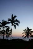 пальмы Гавайских островов стоковая фотография