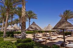 Пальмы, зонтики и sunbeds на песчаном пляже Красное Море свободного полета Стоковые Изображения