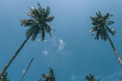 Пальмы и голубое небо стоковое изображение rf