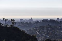 Пальмы и городская ратуша Лос-Анджелеса стоковая фотография