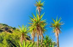 Пальмы и красивое голубое небо, Калифорния стоковое изображение rf