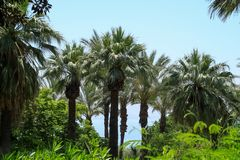 Пальмы и листва в садах держателя Beatitudes в Израиле стоковое фото rf