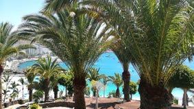 Пальмы и море стоковое фото rf