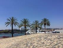 Пальмы и яхты стоковые фотографии rf