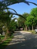 Пальмы и aley Волшебный весенний сезон стоковые изображения