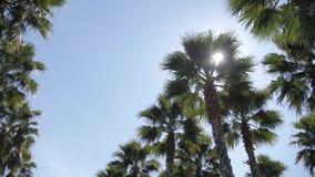 Пальмы Калифорния в улице Перемещение, лето, каникулы и тропическая концепция пляжа сток-видео