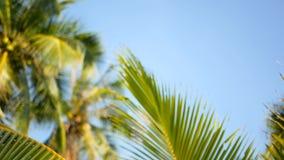 Пальмы кокоса увенчивают против голубого солнечного взгляда перспективы неба от земли видеоматериал