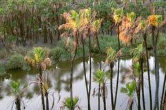 пальмы кокоса стоковые фото
