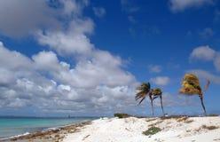 пальмы коралла пляжа Стоковые Изображения RF
