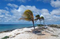 пальмы коралла пляжа Стоковые Изображения