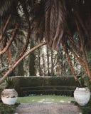 Пальмы к роскошному саду стоковые изображения