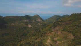 пальмы ландшафта тропические philippines видеоматериал