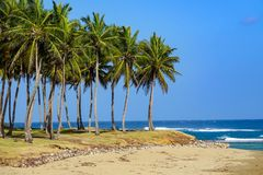 Пальмы морем Стоковые Изображения