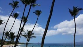 Пальмы на гаваиском пляже Стоковая Фотография