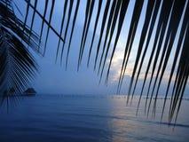 Пальмы на заливе Amatique, Izabal, Гватемале стоковые фотографии rf