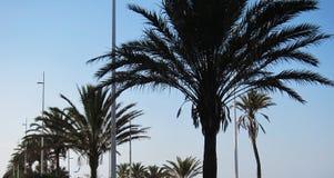 Пальмы на пляже Стоковое Изображение RF