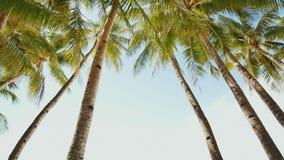 Пальмы на фоне света - голубое небо в ясной погоде philippines акции видеоматериалы