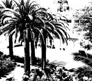 Пальмы на черно-белой предпосылке ладони предпосылки тропические экзотический ландшафт Стоковое Изображение