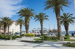 Пальмы на riviera и голубом небе в разделении Хорватии Европе стоковая фотография