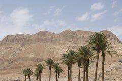 пальмы оазиса Израиля gedi en даты Стоковая Фотография