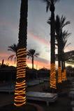 Пальмы обернутые в свете в вечере под заходящим солнцем в Египте Стоковое Изображение