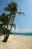 пальмы острова boracay пляжа Стоковое фото RF