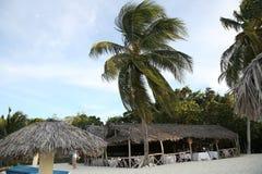 пальмы пляжа тропические стоковая фотография rf
