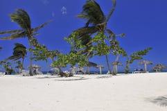 пальмы пляжа тропические Стоковые Изображения RF