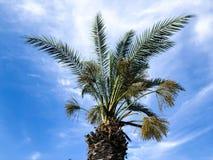 Пальмы против голубого неба, пальмы на тропической кокосовой пальме побережья, дереве лета Стоковое Изображение RF