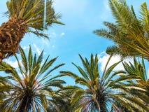 Пальмы против голубого неба, пальмы на тропической кокосовой пальме побережья, дереве лета Стоковое фото RF