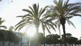 Пальмы против яркого солнца в улице южного города, концепции каникул Efir Красивый летний день с зеленым цветом сток-видео