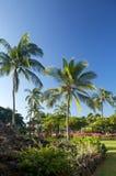 пальмы сада тропические Стоковое Изображение