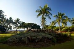 пальмы сада тропические Стоковые Фотографии RF