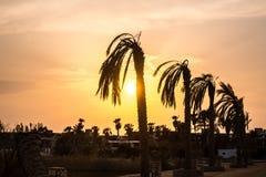 Пальмы силуэта увядая на оранжевом заходе солнца стоковое изображение