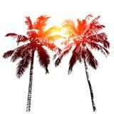 пальмы тропические стоковые изображения rf