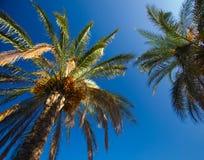 пальмы стоковые изображения