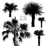 пальмы иллюстрация штока