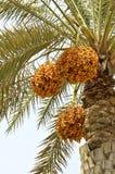 пальмы Стоковое Фото