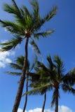 пальмы стоковое изображение