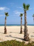 пальмы Стоковые Фото